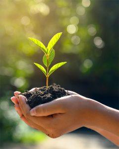 planta responsabilidade social